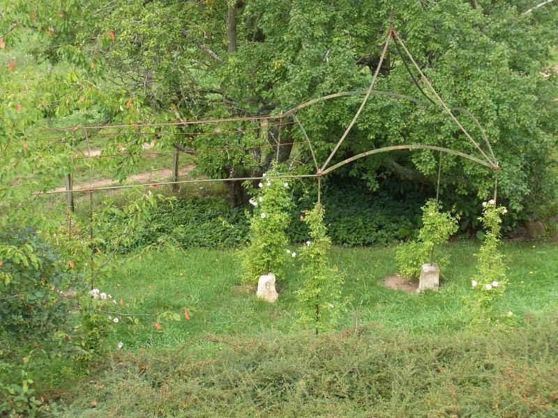 Roseraie dans le jardin longue de 13 mètres avec 12 rosiers grimpants