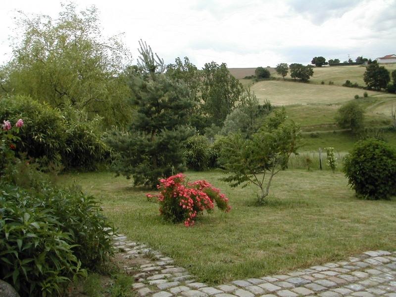 Buisson de rosier rouge à ma maison de campagne