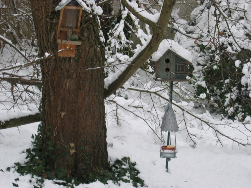 Les même nichoirs à oiseaux dans le jardin en hiver à côté de la marre